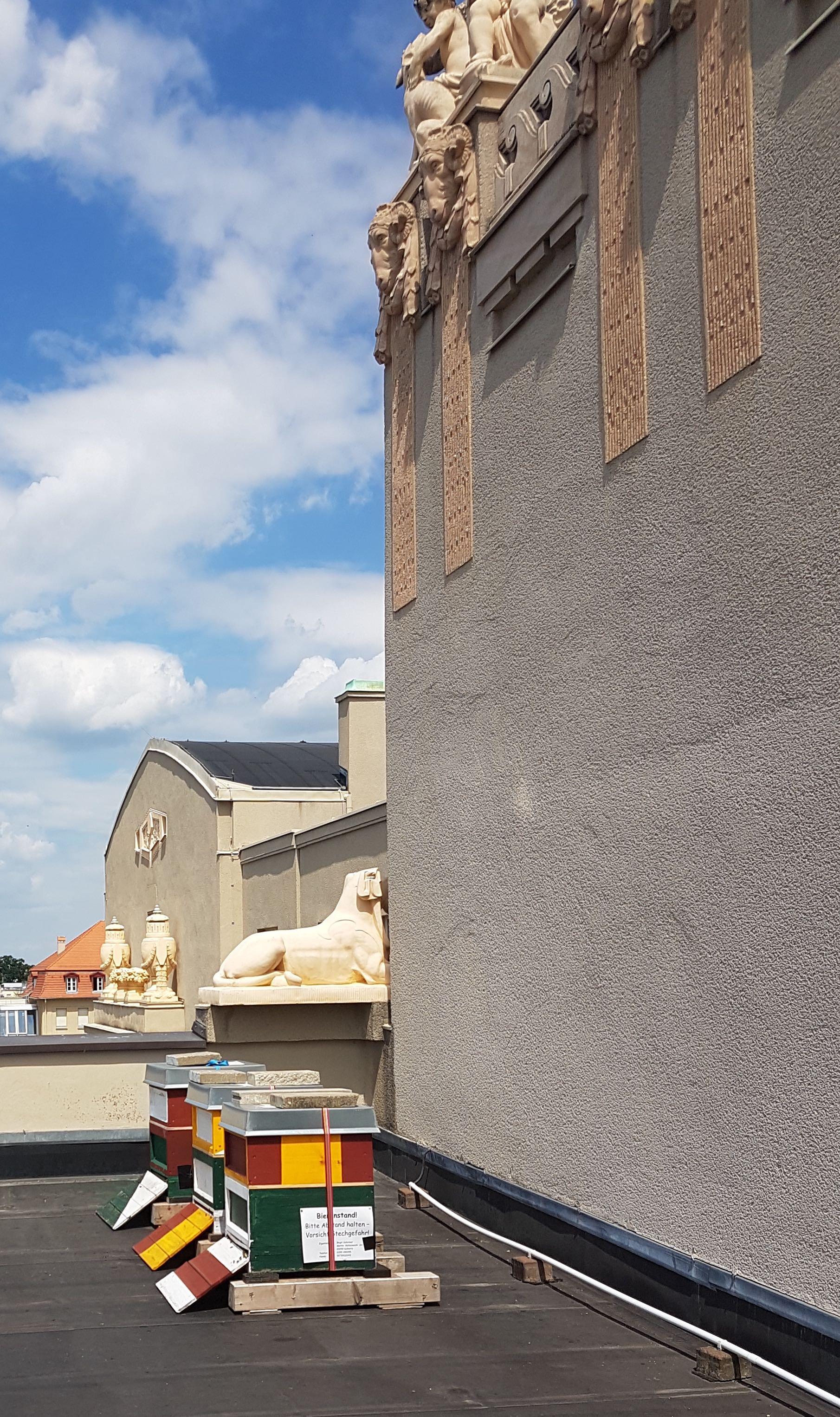 Bienenvölker auf dem Dach